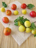 Red and yellow cherry plums Royalty Free Stock Images