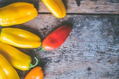 Red and Yellow Chilies Stock Images