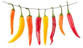 Red yellow chilli peppers isolated on white royalty free stock images