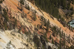 Red and yellow cliffs of the Yellowstone River, Wyoming. Royalty Free Stock Photography