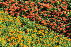 Red and yellow color flower cluster pattern Royalty Free Stock Images