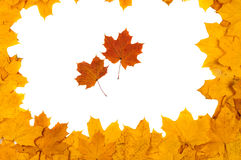 Red and yellow decorative maple leafs Royalty Free Stock Image