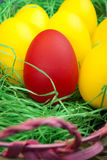 Red and yellow easter eggs Stock Photos