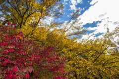 Red and Yellow fall foliage branches agains a blue sky Stock Photo