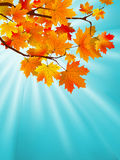 Red yellow fall maple leafs over sky. EPS 8 Stock Images