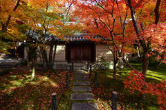 Red and yellow fall maple trees along a path to a gated wall in Kyoto, Japan Royalty Free Stock Photos
