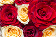 Red and yellow floral roses background Royalty Free Stock Photo