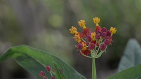 Red and yellow flower and insect stock footage