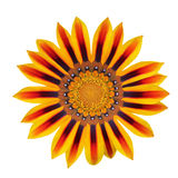 Red and yellow flower isolated Royalty Free Stock Photography