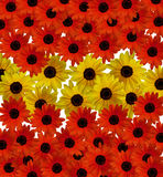 Red and yellow flowers Royalty Free Stock Images