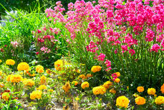 Red and yellow flowers. In sunny day Royalty Free Stock Images