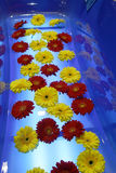 Red and yellow flowers Stock Image
