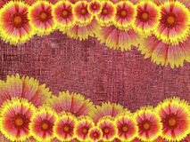 Red-yellow   flowers,  on burgundy fabric background .  Bright floral composition. card for the holiday. collage of flowers. Natur Royalty Free Stock Photos