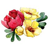 Red and yellow flowers. Isolated flower illustration element. Background set. Watercolour drawing aquarelle bouquet. Red and yellow flowers. Floral botanical vector illustration