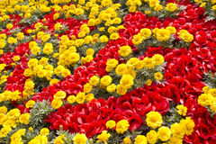 Red and yellow flowers in a garden royalty free stock photo