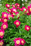 Red and Yellow Flowers on Green Stock Images