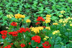 Red and yellow flowers Stock Photo