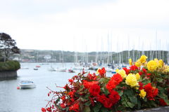 Red and Yellow Flowers Kinsale Harbour Cork Ireland. Red and Yellow Flowers in focus and Kinsale Harbour Cork Ireland in the background stock images