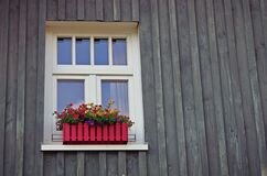 Red and Yellow Flowers Near Window Stock Images