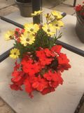 Red and yellow flowers on a patio. Floral bursts of flowers Stock Photo
