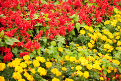 Red-yellow royalty free stock image