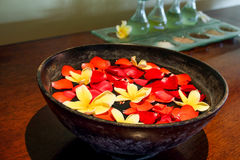 RED AND YELLOW FRANGIPANI FLOWER. Inside a bowl filled with water Royalty Free Stock Image