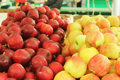 Red  and yellow fresh apples in the market. Red and yellow fresh sweet apples in the Riga, Latvia market Stock Photo