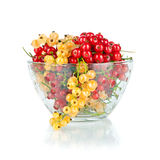 Red and yellow fresh berry currant in glass bowl Royalty Free Stock Images