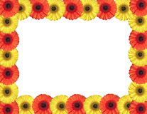 Red and yellow gerbera flowers create a frame on white Stock Photo
