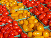 Red and yellow grape tomatoes Royalty Free Stock Photo