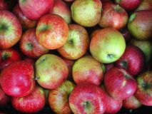 Red, yellow and green apples jonagored background texture. Rape fruit. Apple production. Royalty Free Stock Images
