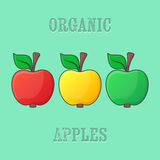Red yellow green apples Stock Image