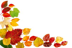 Red yellow and green autumn leaves Royalty Free Stock Photography
