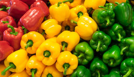 Red, yellow, and green bell peppers (capsicum) background Stock Images