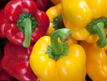 Red Yellow Green BellPepper. Red Yellow Green Bell Pepper at The Pak Khlong market Stock Image