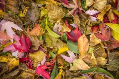 Fall leaves on ground. Stock Photos