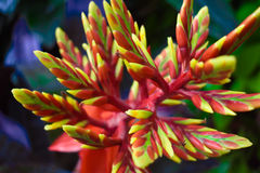 Red, yellow, green flower. Close up photo of a red, yellow, and green flower, taken at the Biltmore Estate in Asheville, NC Stock Image