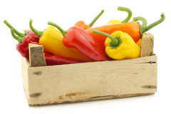 Red,yellow and green sweet peppers (capsicum) Royalty Free Stock Image