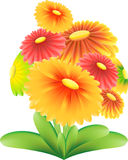 Red,Yellow, GreenGarden  Flower Vector on white background Royalty Free Stock Photography