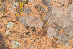 Red, yellow and grey lichens Stock Photo