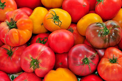 Red and Yellow Heirloom Tomatoes stock images