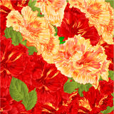 Red and yellow hibiscus vector Stock Photography