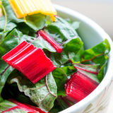 Red and yellow leafy chard in a bowl. Shot with selective focus in window light Royalty Free Stock Photo