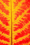 Red and yellow leaves Stock Image