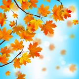 Red and yellow leaves against blue sky. EPS 8 Royalty Free Stock Photo
