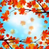 Red and yellow leaves against blue sky. EPS 8 Stock Photos