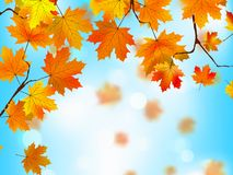 Red and yellow leaves against blue sky.EPS 8 Stock Photos