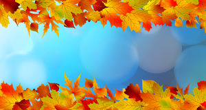 Red and yellow leaves against a bright blue sky Royalty Free Stock Image