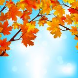 Red and yellow leaves against bright sky. EPS 8 Stock Image