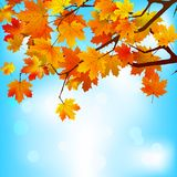 Red and yellow leaves against bright sky. EPS 8 Royalty Free Stock Images
